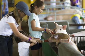Lovely Family feeds Pig