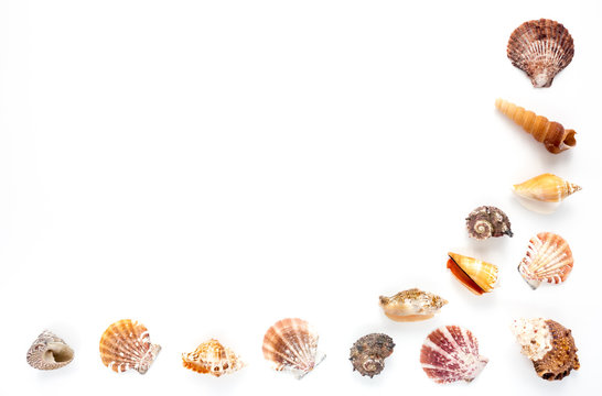 Half frame of beautiful seashells isolated on white background with lots of copy space.