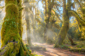 Foto op Canvas Bos Fairy forest is filled with old temperate trees covered in green and brown mosses. Hoh Rain Forest, Olympic National Park, Washington state, USA