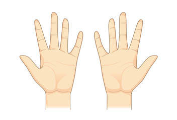 Two palm hand vector on isolated. Illustration about Human body part.