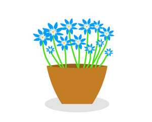 Blue flowers in a pot vector iamge