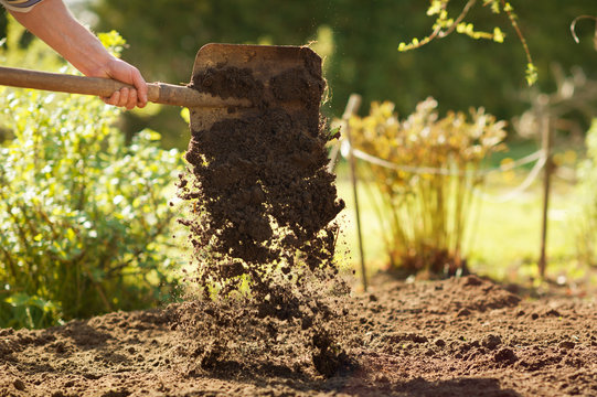 Farming, gardening, agriculture and people concept -man with shovel digging garden bed or farm