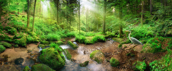 Wall Mural - Enchanting panoramic forest scenery with soft light falling through the foliage, a stream with tranquil water and a heron