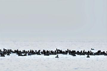 Foto auf Gartenposter Antarktika Black birds on white background