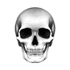 Stippled human skull with a lower jaw. Vector textured illustration.