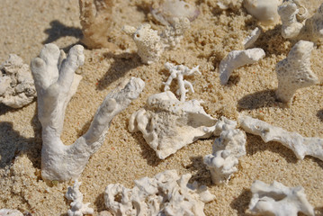 White carals of the red sea on the sand