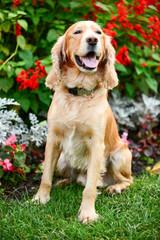 Dog spaniel in flowers