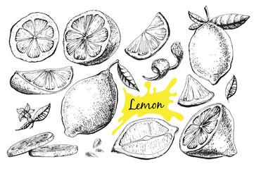Vector hand drawn lime or lemon set.