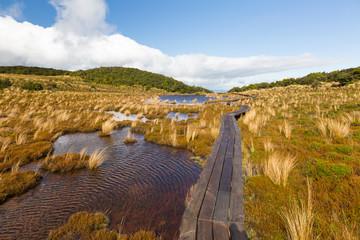 Waitonga Falls Track bei Ohakune in Neuseeland Wanderweg