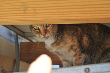 A hiding cat
