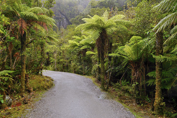 Path in a rainforest in New Zealand