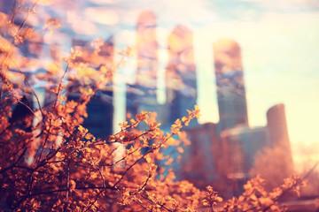 blurred background bokeh Orange autumn park
