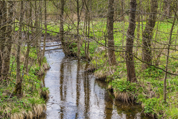 Fish pond in the spring in the middle of April. Green grass on the banks of the creek which flows into the pond. Podlasie, Poland.