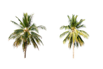 Coconut palm trees on white isolation