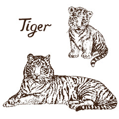 Tiger lying and Tiger cub, hand drawn doodle, sketch in pop art style, vector illustration