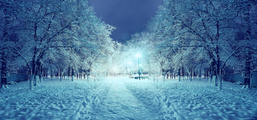 Foto op Canvas Bos winter night in the park