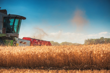 Wall Mural - Combine harvester agriculture machine harvesting golden ripe wheat field