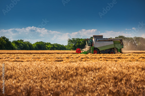 Wall mural Combine harvester agriculture machine harvesting golden ripe wheat field