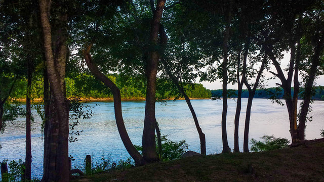 Apalachicola River View