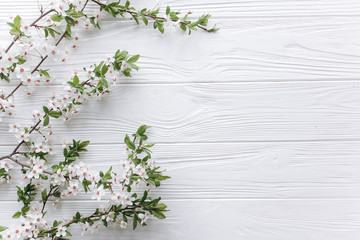spring flower on white wooden background.mothers day.space for your text