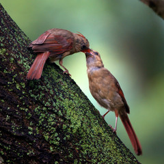 nature baby tree birds by vfritts