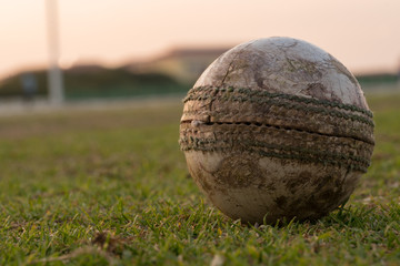 Cricket ball on the grass