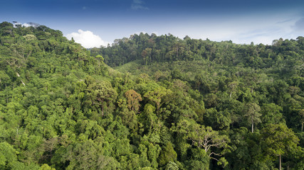 Rainforest. Aerial view of rain forest jungle trees