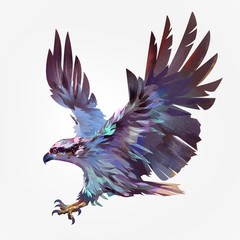 Isolated painted flying bird hawk