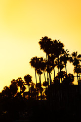 Beautiful sunset with palms silhouettes at beach