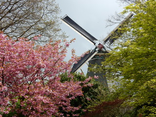 windmill and colorful trees in Kaukenhof, Netherlands
