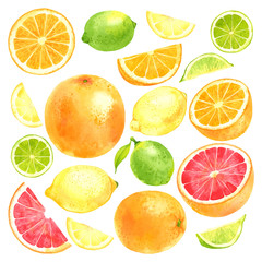 Watercolor vector fruit set with lemon, lime, orange and grapefruit