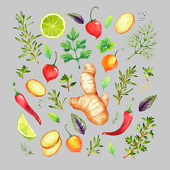 Isolated watercolor vegetables set with ginger, lime, chili  pepper, rosemary, parsley, basil, thyme, dill on grey background