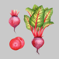 Isolated watercolor beetroot on grey background