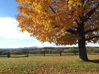 Fall colors vermont