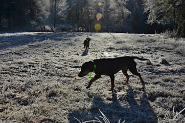 silhouettes of dogs in the morning winter sun