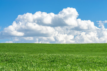 Green grass field with clear blue sky and white clouds