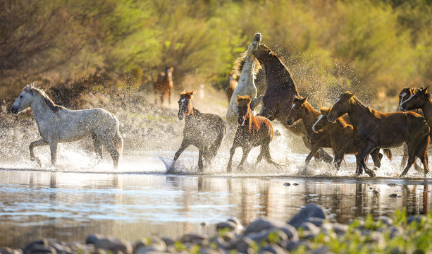Wild Horses @ Salt River, Arizona
