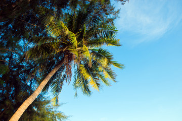Coconut palm tree with blue sky near sea beach.
