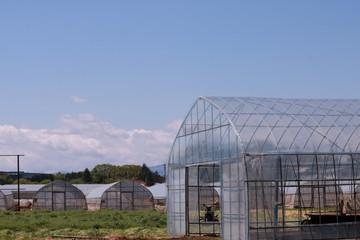 青空と温室の風景