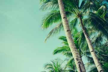 Wall Mural - Coconut palm trees tropical background, vintage
