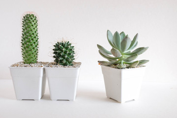 succulents or cactus in concrete pots over white background on the shelf