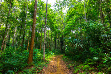 way in rain forest