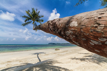 Schiefe Palme in Indonesien