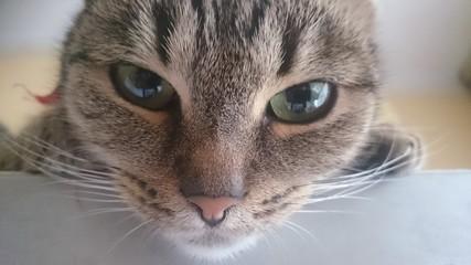 Głodna kotka.