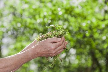 Junge Pflanze in der Hand