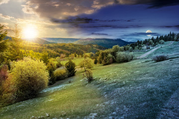 forest on a mountain hillside in rural area. day and night