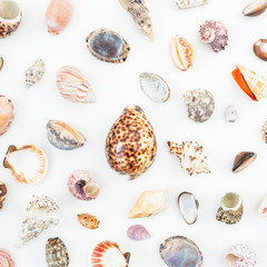 Natural pattern of sea shells on white background. Flat lay. Top view. Ocean background