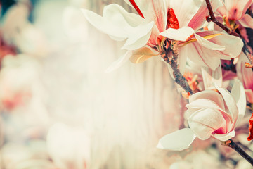 Springtime floral nature background with lovely magnolia blossom in pastel color, outdoor