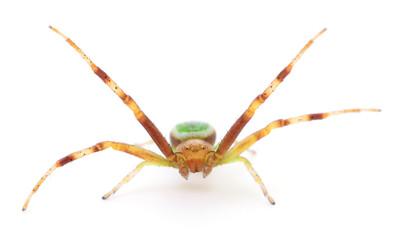 Green spider on white.