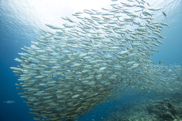 Unterwasser - Riff - Fisch - Fischschwarm - Schwamm  - Tauchen - Curacao - Karibik